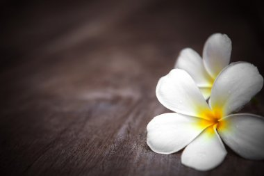 White frangipani flowers on wooden background with shallow depth of field