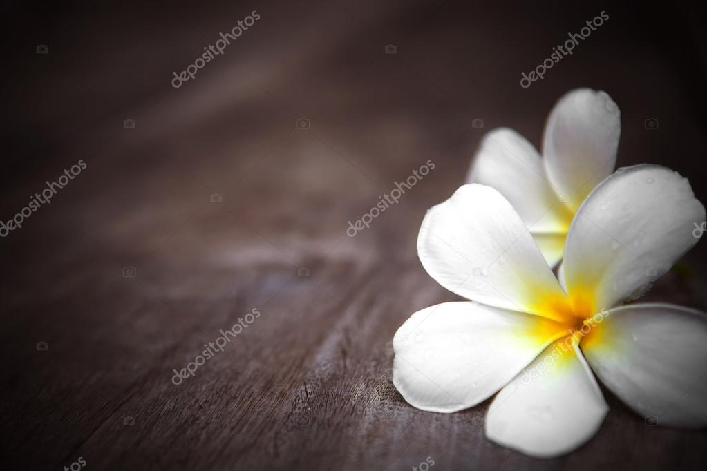 White frangipani flower on wooden background with shallow depth of field