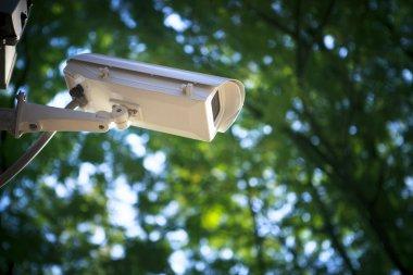 Surveillance cctv camera security watching in outdoor garden pa