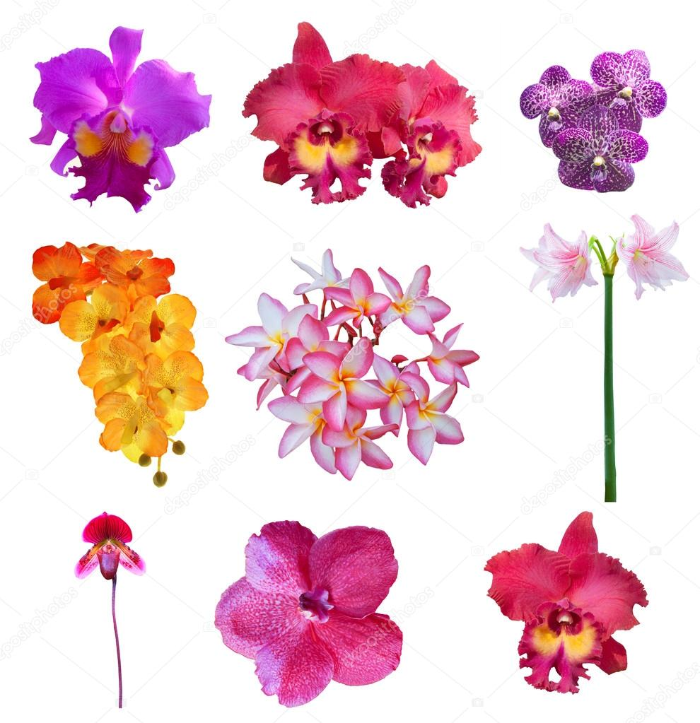 Mixed collection of close up beautiful flowers petal isolated on