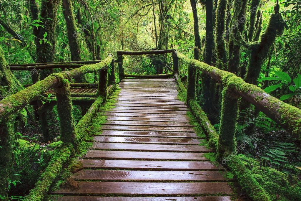 Wet wooden trail birdge walking way at hill mountain evergreen f