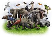 Fotografia collage di animali