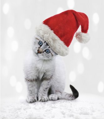 Young Cat In A Christmas Hat