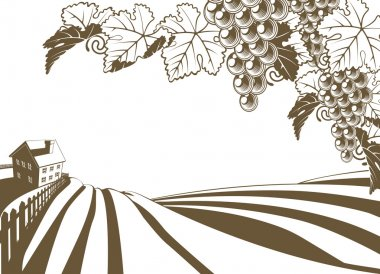 Vineyard Grapevine Farm Illustration