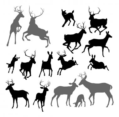 Silhouette Deer including fawn, doe bucks and stag. Also two stags fighting ans a family group set stock vector