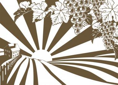 Sunrise Grape Vine Vineyard Graphic