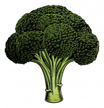 Broccoli vintage woodcut illustration
