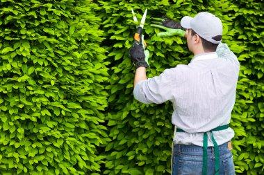 Professional gardener pruning an hedge stock vector