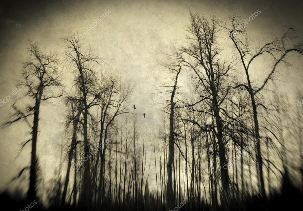 Scary winter woods