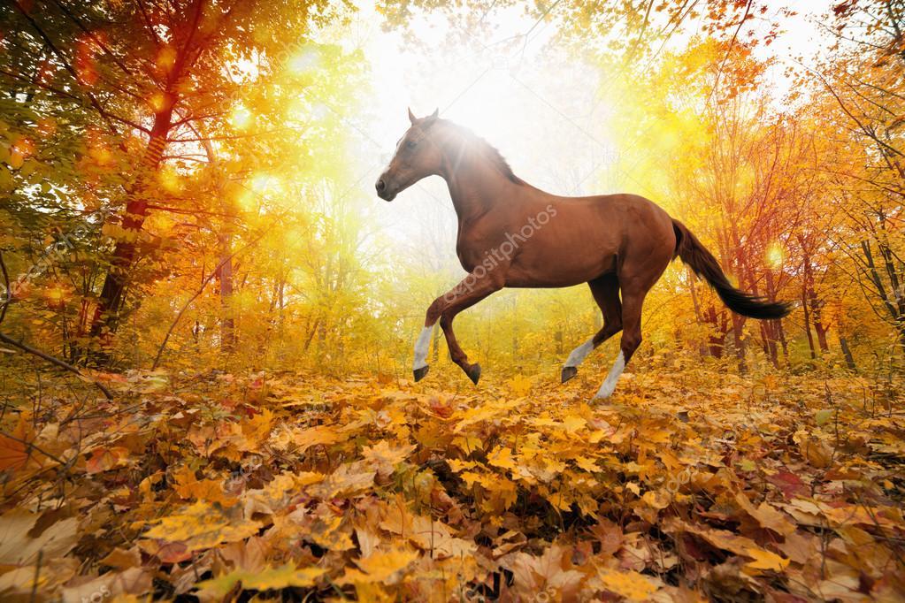 koně v parku na podzim — Stock Fotografie © I g0rZh  34042763 b841e48fe3
