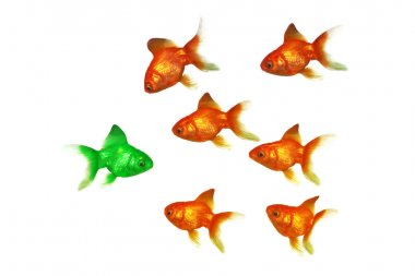 Gold fish group one being green
