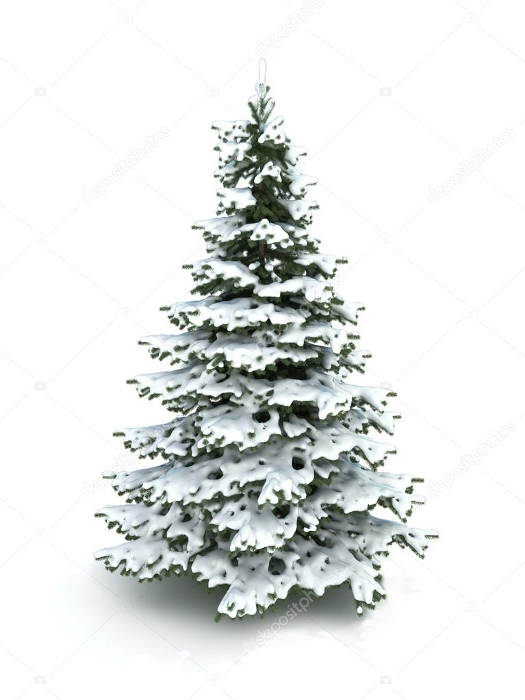 spruce tree christmas tree covered with snowisolated on a white background part of a winter tree series photo by digitalstorm - Snow Covered Christmas Trees