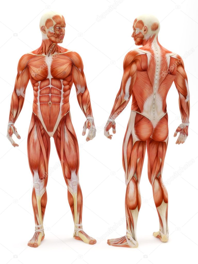 Anatomy Stock Photos Royalty Free Anatomy Images Depositphotos