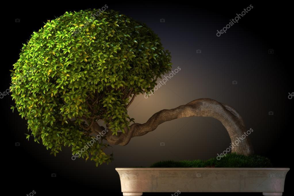 Bonsai tree side view