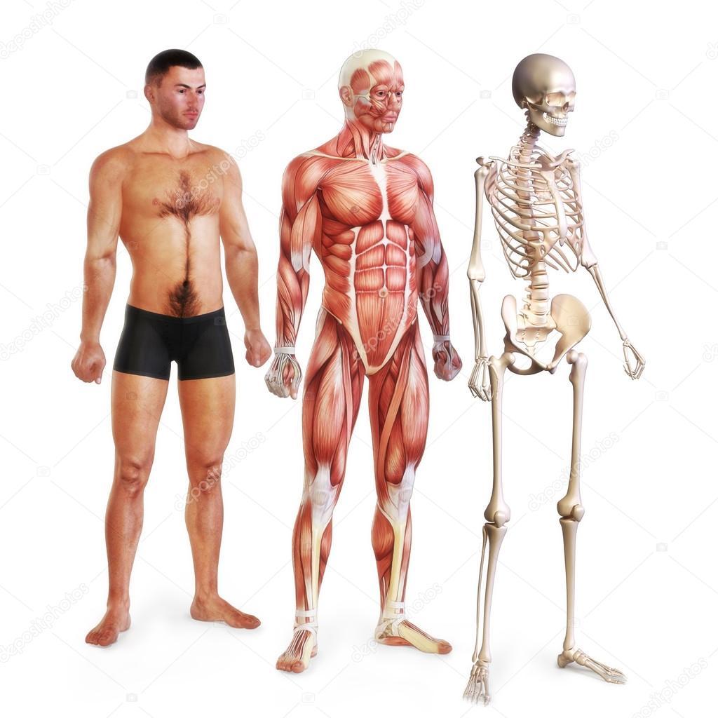 männliche Abbildung von Haut, Muskeln und Skelett-systems ...
