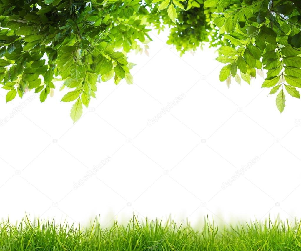 Fresh spring green grass with green leaf , Summer time
