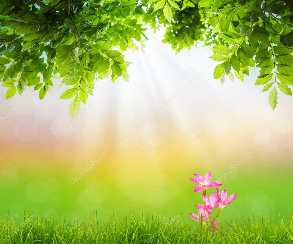 Pink flower on Fresh spring green grass with green leaf , Summer