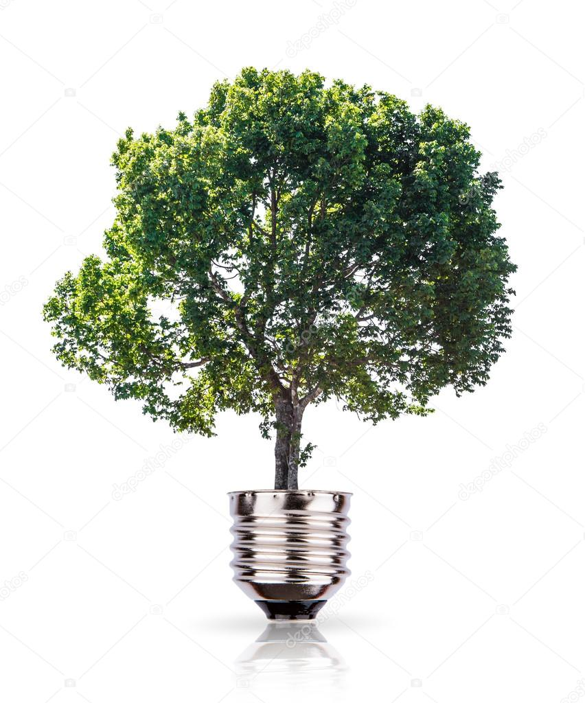 Eco concept: green tree growing out of a bulb.