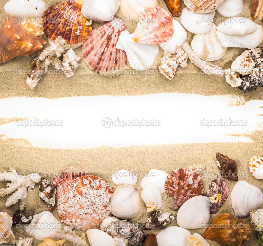 Sea shells on beach sand . Summer background