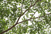 Fotografia rami e foglie verdi