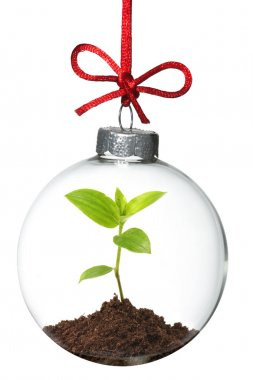 Christmas ornament with young plant inside