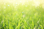 Fotografie Green grass background