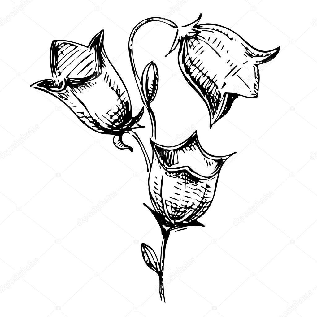 Картинка черно-белая колокольчики цветы