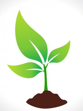 abstract eco green plant with soil