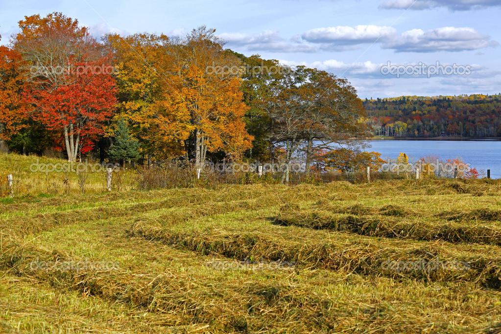 Siano Wiersze Kolory Jesieni Zdjęcie Stockowe Jamieroach