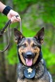 Portrét pracovní policejní pes