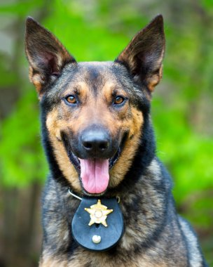 Portrait of working police dog