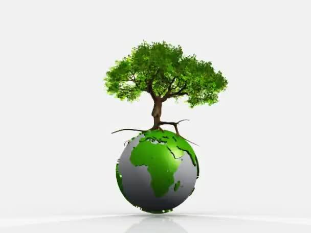 fa a földön