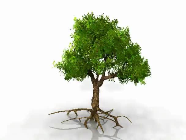 zelený strom na bílém pozadí