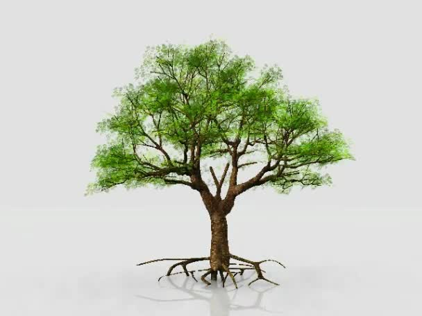 Baum - Kreislauf des Lebens