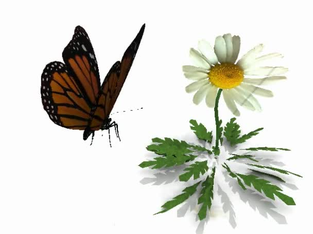 Flight monarch butterfly on a white background with flower