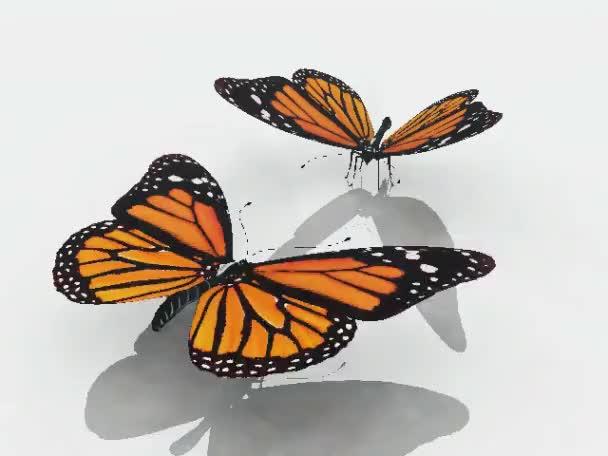 Flug Monarchfalter auf weißem Hintergrund