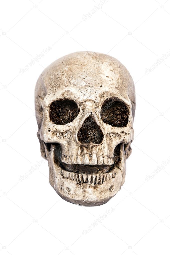 Human Skull Front View Stock Photo Marchello74 14057553