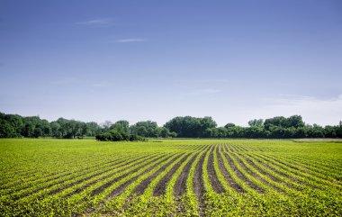 Organic farm land with green rows