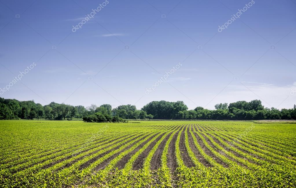Organic farm land with green rows