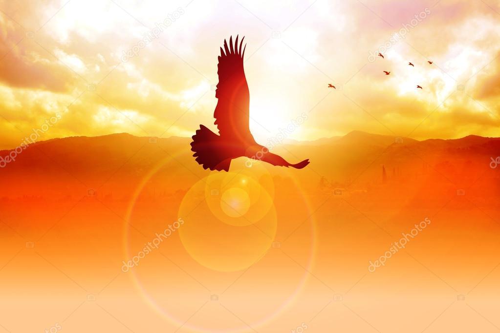 Freedom On Sky