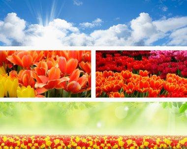 Landscape spring nature banners
