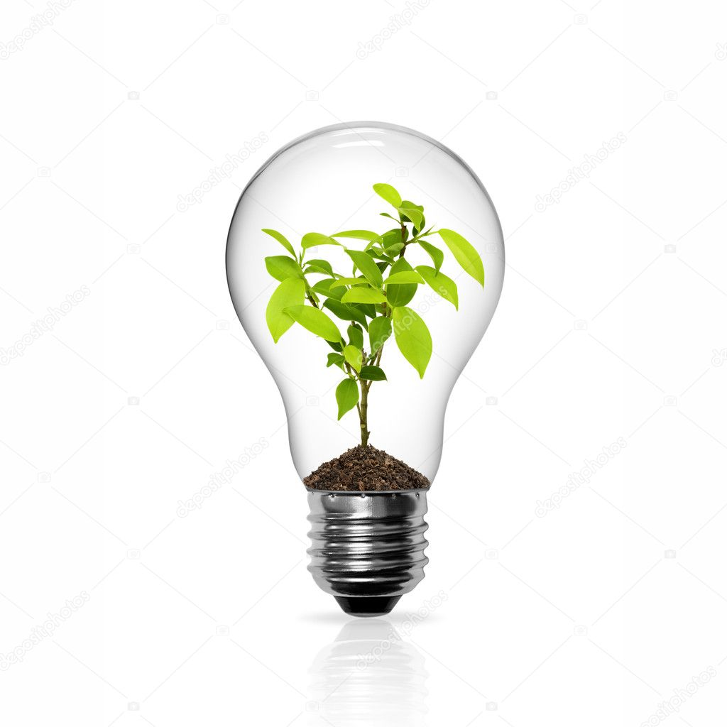 Light Bulb with green tree inside