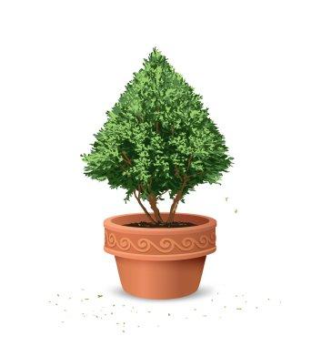 Pots pine tree design background