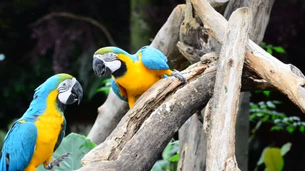 Macaw parrots.