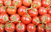 Fotografie cherry rajčata