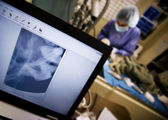 high-tech veterinární lékařství