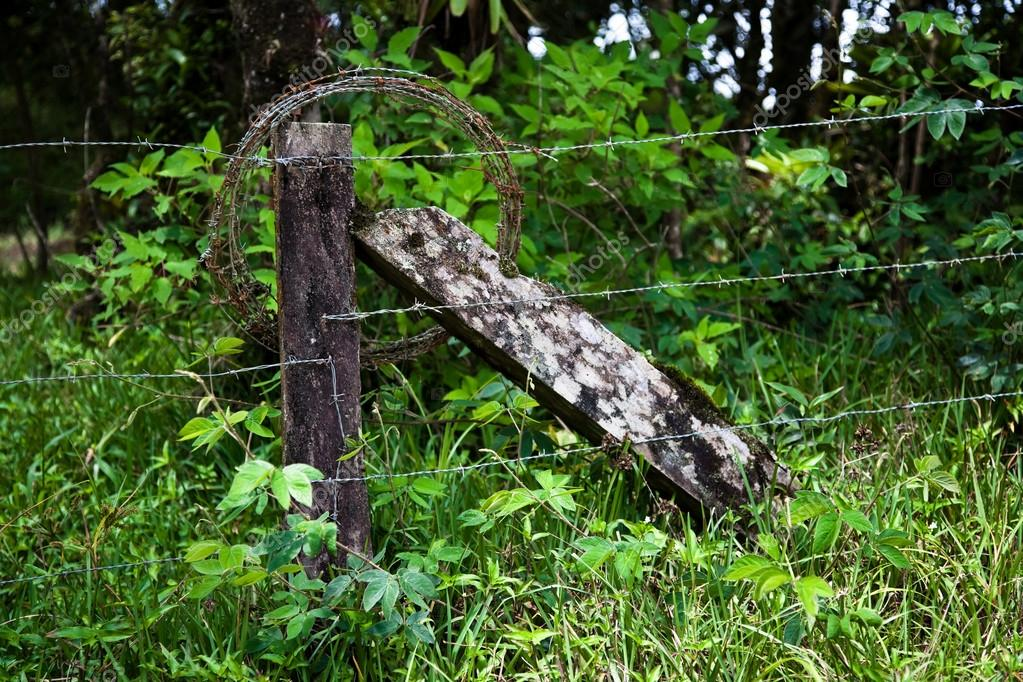 Rustic barbed wire fence in Costa Rica