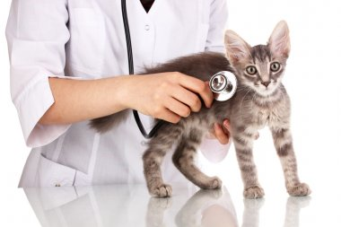 Veterinarian examining a kitten isolated on white