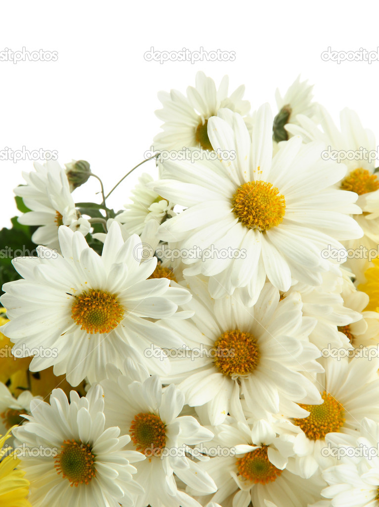 Mazzo Di Fiori Margherite.Bouquet Of Beautiful Daisies Flowers Isolated On White Stock