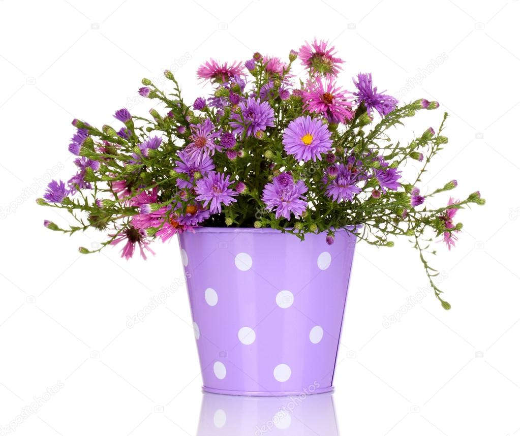 beautiful bouquet of purple flowers in metal pot isolated